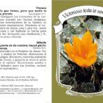 Folletos Dípticos para Evangelismo, Victorioso